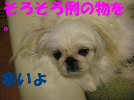 1119_convert_20091119102200.jpg