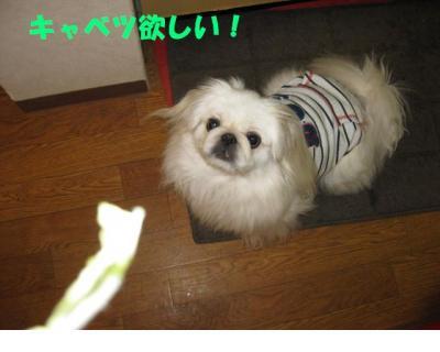繝溘Ν繧ッ繝サ繧ュ繝」繝吶ヤ_convert_20091023232349