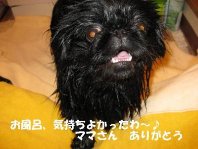 繝「繧ォ鬚ィ蜻・convert_20091024085746