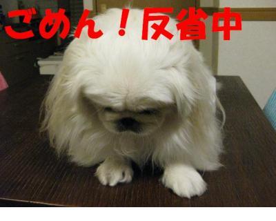 蜿咲怐荳ュ_convert_20091104184619