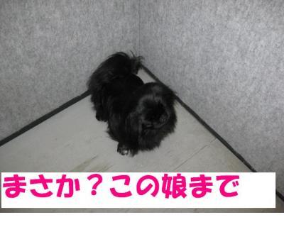繧ゅ°001_convert_20091104184601