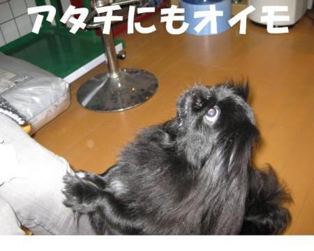 繧「繧ソ繝√>繧・convert_20091108202636
