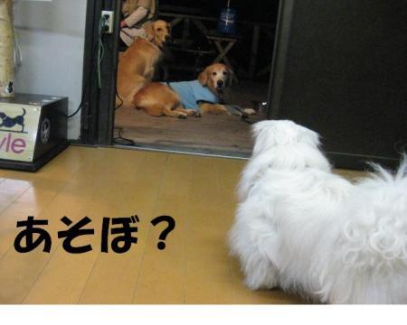 縺ゅ◎縺シ_convert_20091108202549