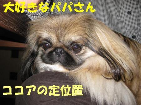 繧ウ繧ウ繧「螳壻ス咲スョ_convert_20091111084237