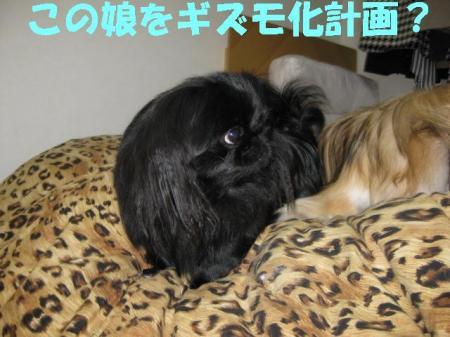 縺弱★繧ょ喧險育判_convert_20091114085019