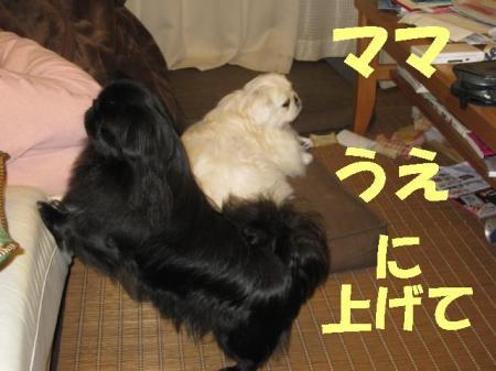 荳翫£縺ヲ_convert_20091114085102