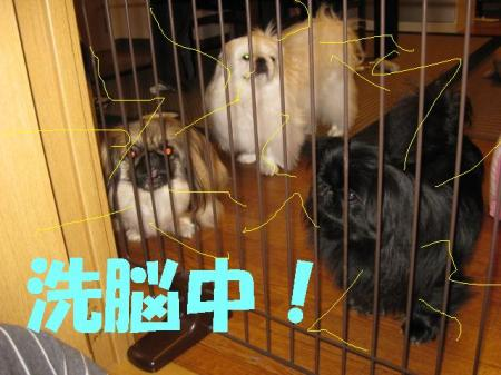 豢苓┻荳ュ_convert_20091114084950
