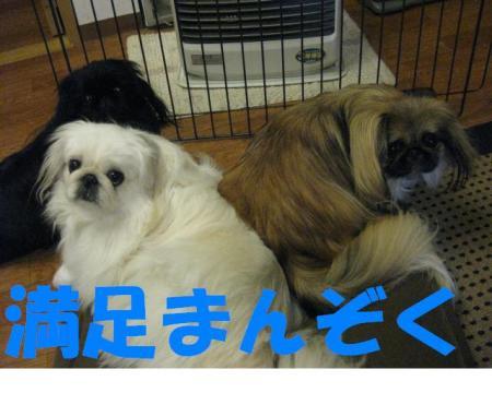 貅�雜ウ_convert_20091119185043