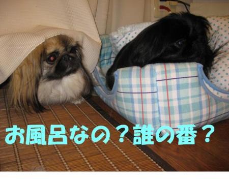 縺企「ィ蜻ゅ□繧・convert_20091122094145