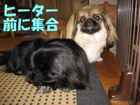 繝偵・繧ソ繝シ蜑浩convert_20091124090704