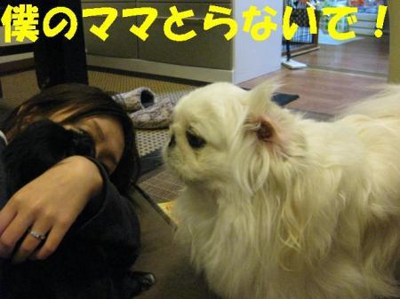 蜒輔・縺セ縺セ_convert_20091124090820