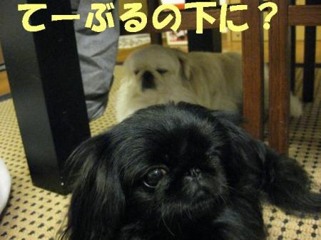 縺ヲ繝シ縺カ繧祇convert_20091126091724