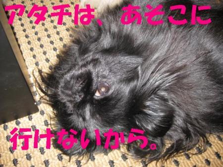 繧「繧ソ繝\convert_20091126091703