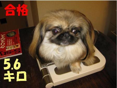繧ウ繧ウ繧「蜷域�シ_convert_20091127082636