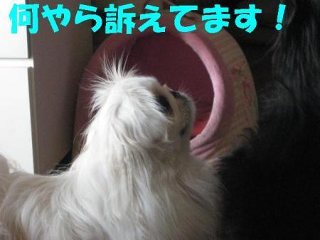 辟。鬘・01_convert_20091130091211