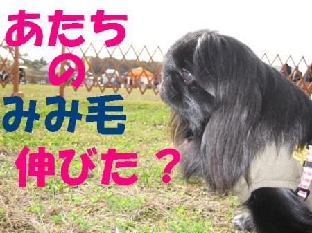 繝「繧ォ閠ウ豈媽convert_20091203083721