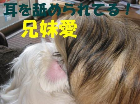 蜈・ヲケ諢媽convert_20091203083738