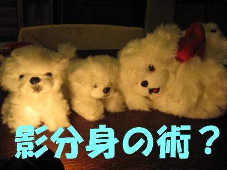 蛻・コォ_convert_20091208090454