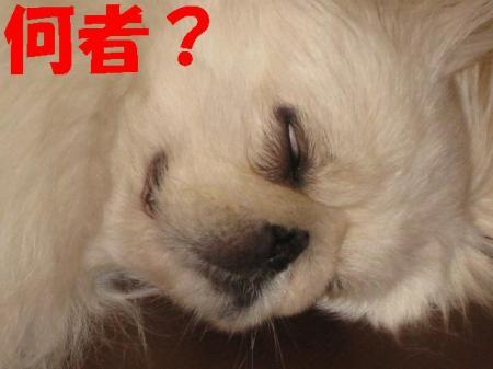 菴戊�・convert_20091208090400