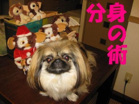 蛻・コォ_convert_20091210104755