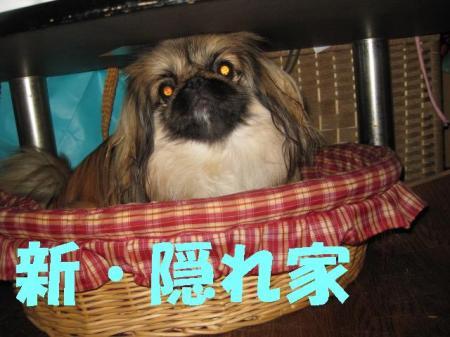 髫�繧悟ョカ_convert_20091210104731