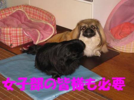 螂ウ驛ィ_convert_20091215104225
