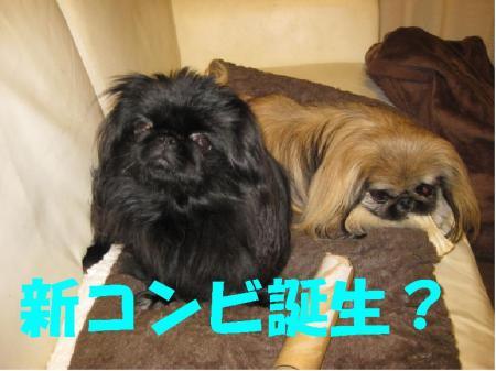譁ー繧ウ繝ウ繝点convert_20091218103724