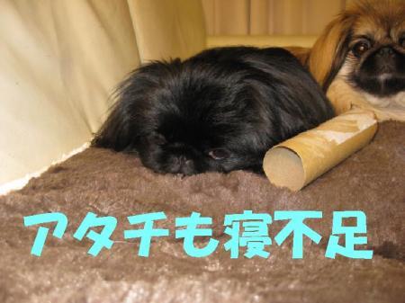 蟇昜ク崎カウ_convert_20091223084305