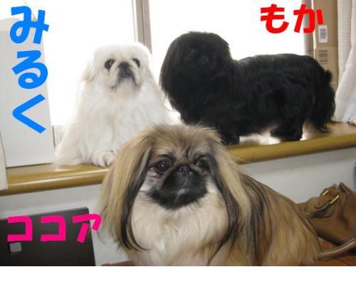 3莠コ_convert_20091231081552