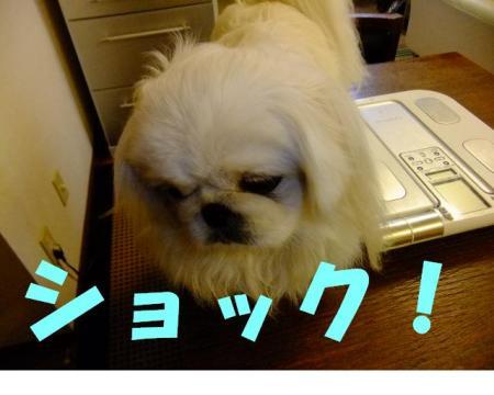 繧キ繝ァ繝・け_convert_20100104084131