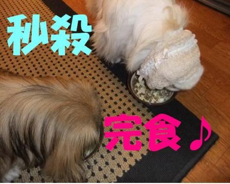 縺九s縺励g縺柔convert_20100112203517