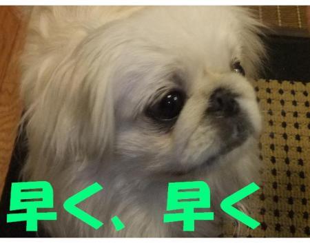 縺ッ繧・¥_convert_20100112203534