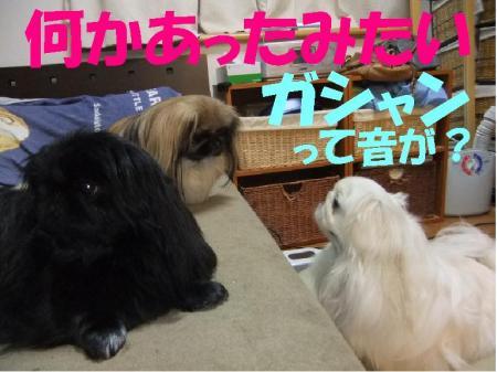 繧ャ繧キ繝」繝ウ_convert_20100113103325