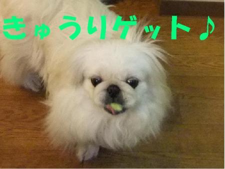 縺阪e縺・j_convert_20100127084755
