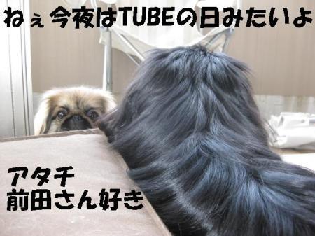 TUBE_convert_20091111084205.jpg