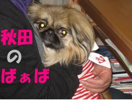akita_convert_20091221214725.jpg