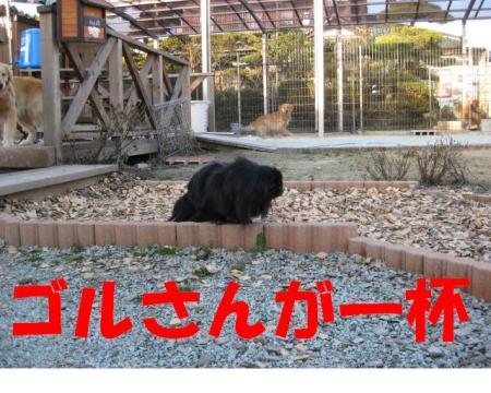 goru_convert_20091227213328.jpg