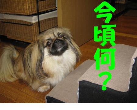 imagoro_convert_20091229170615.jpg