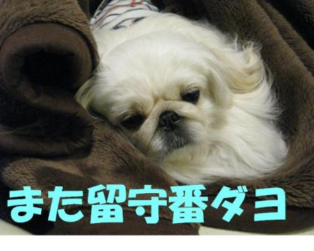 rusubann_convert_20091229114618.jpg
