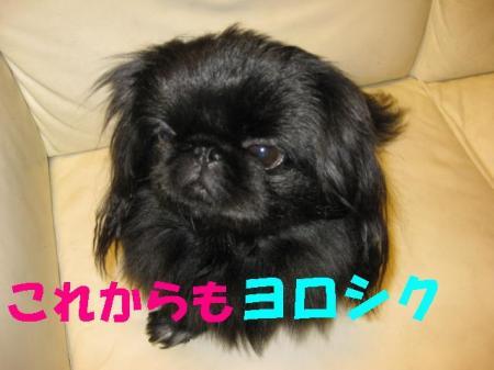 yorosiku_convert_20091120085448.jpg