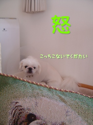DSC05273.jpg