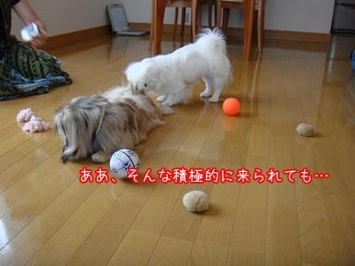 DSC09247.jpg
