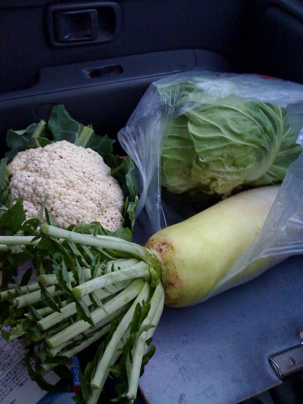 お野菜もらいもの1