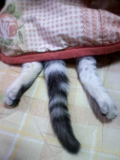 コタツで寝てるちょこの足