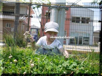 イツ花摘み