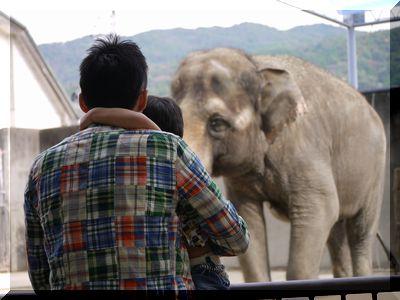 イツと哲男と象