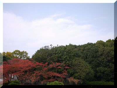 ロハス紅葉