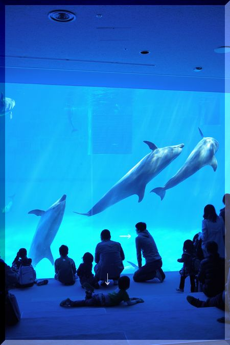 水族館イルカ水槽