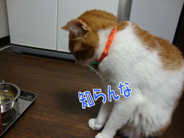 4_20091011134434.jpg