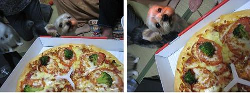 ピザと銀ちゃん